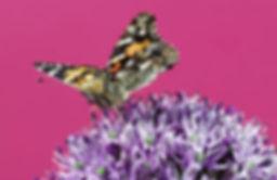 Simbiose entre os insetos e as flores