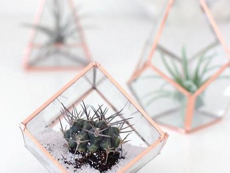 How to Create a Glass Terrarium