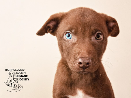 Adopt, Don't Shop! New Fur Babies for the Spring