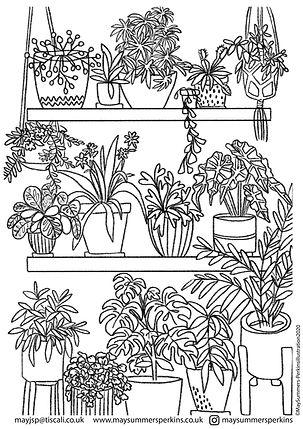 pot plants.jpg