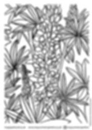DELPHINIUM colouring in sheet.jpg