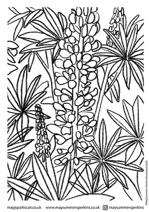 DELPHINIUM colouring in sheet.jpg