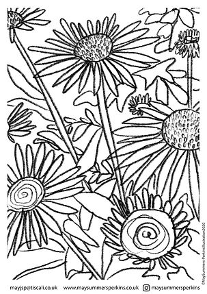 ECHINACEA colouring in sheet.jpg