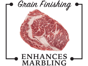 grass-fed-grain-finished-marbling-01-e14