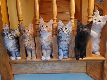 Cat Peeves