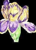 HP-Flower3.png