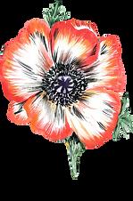 HP-Flower6.png