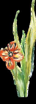 HP-Flower5.png