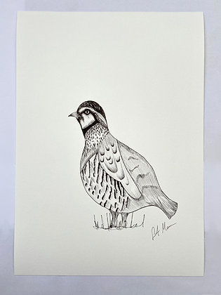 Partridge Print