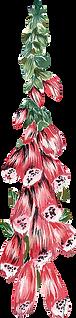 HP-Flower4.png