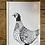 Thumbnail: Pheasant Greetings Card