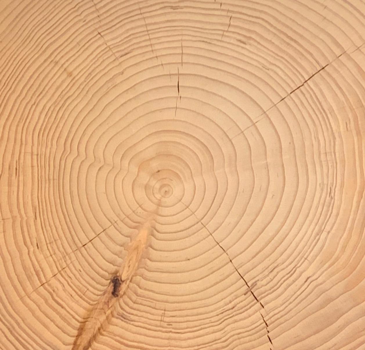 Venatura cedro
