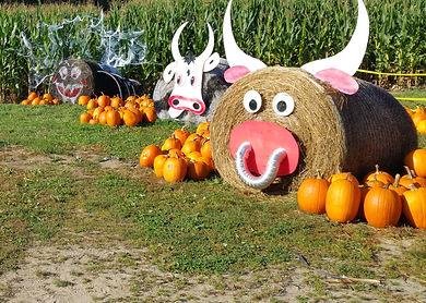 hay bale animals wide crop.jpg