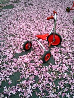 BIKE WITH FLOWERS_edited