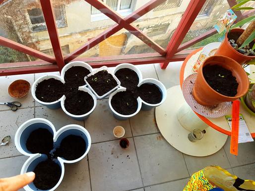 Planter ses salades : Mode d'emploi Part 1/2