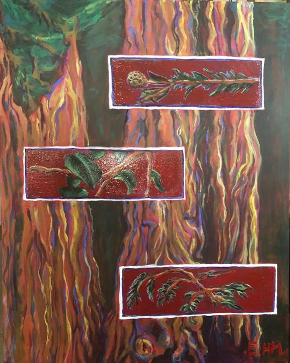Redwood Dreams