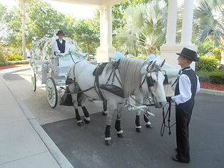 Carriage Ride For The Bride And Groom On Wedding Day