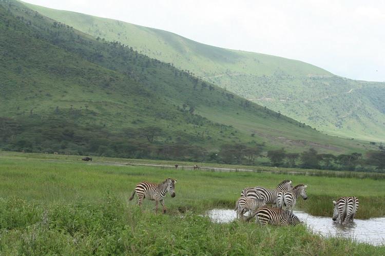 safari dans le cratère du ngorongoro en tanzanie