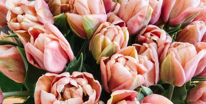 Copper Image Tulip