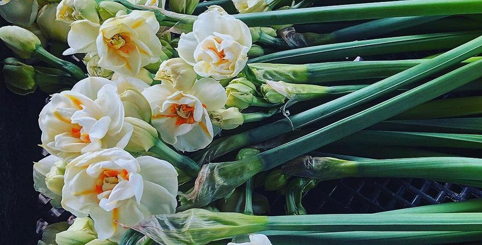 Sir Winston Churchill Narcissus