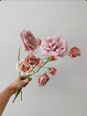 Koko Loko Bare Root Rose *Local pickup only*
