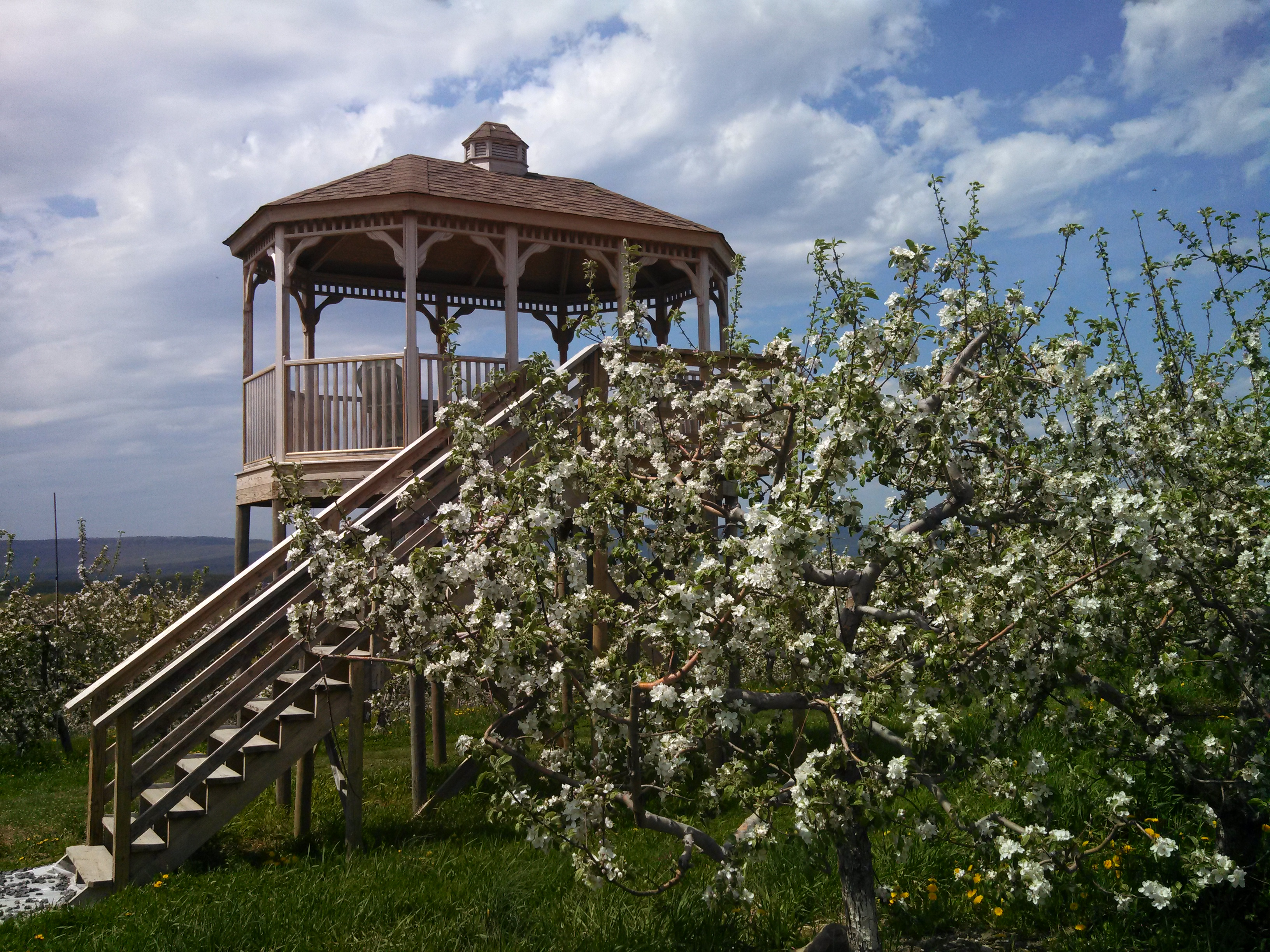 scenery gazebo blossoms
