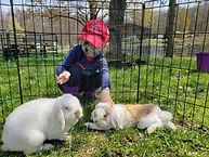 little bunnies.jpg