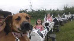 cow train activity for kids and dogs