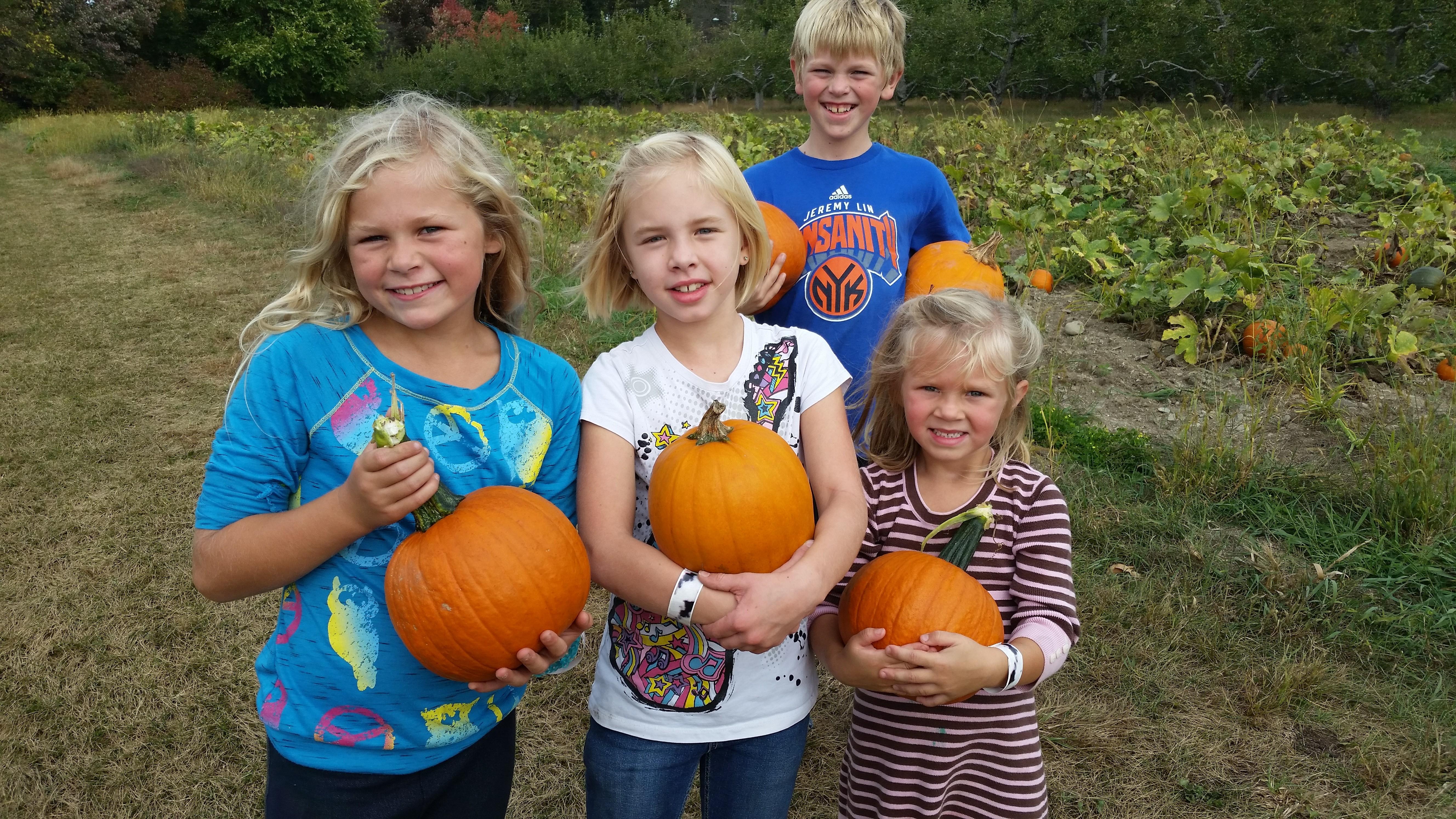 pumpkins u pick ny