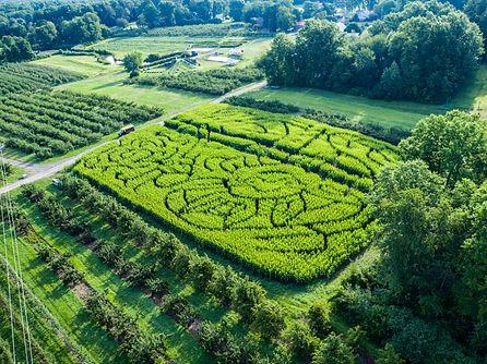 hurds corn maze.jpg