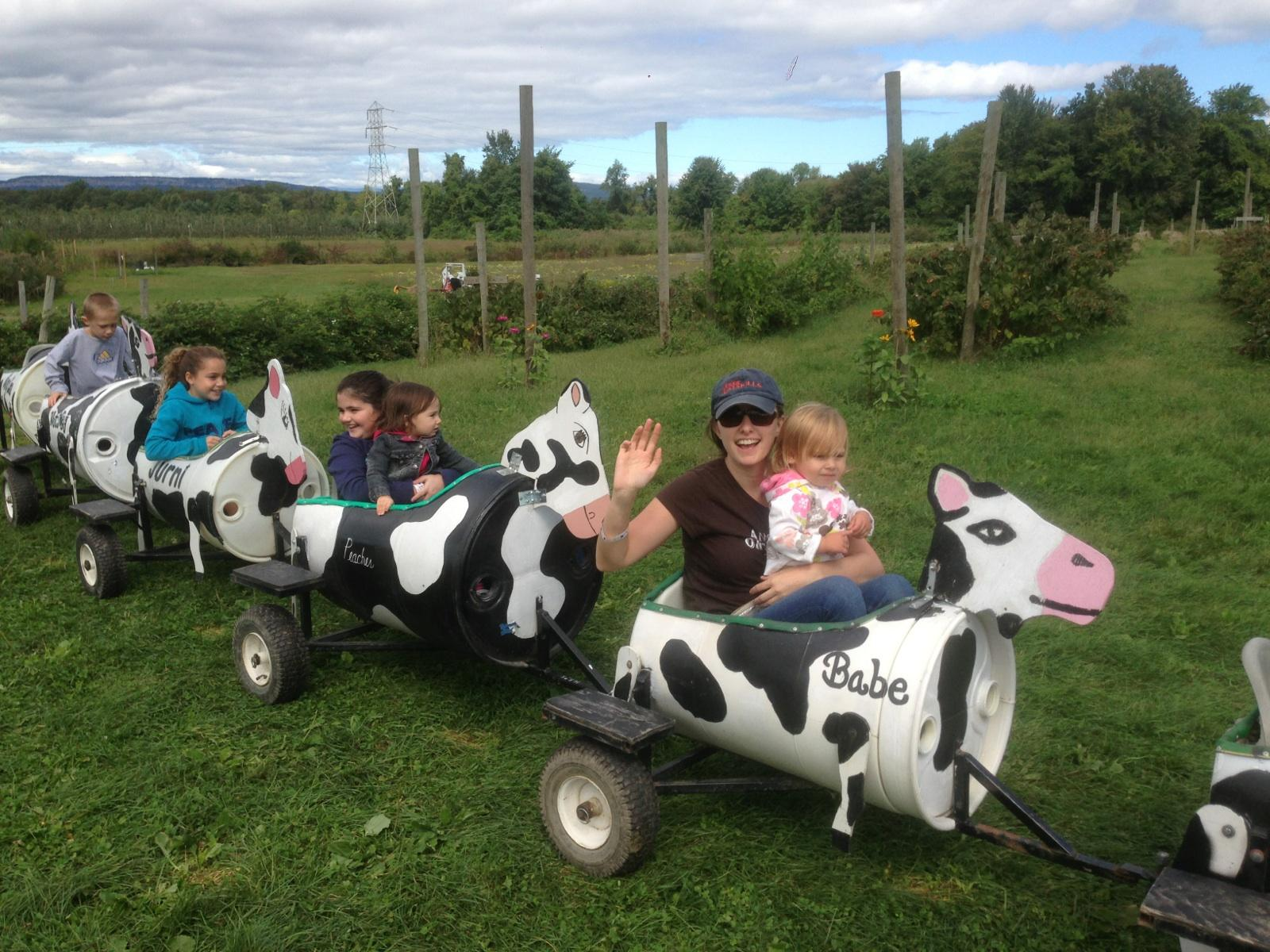 Cow Train in the Apple Farm