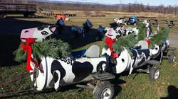 Cow Train Winter
