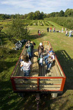Hayride in the Apple Orchard