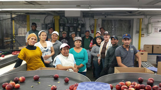 A Visit to the Hurds Apple Packing Line