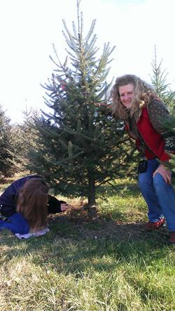 fresh cut christmas tree ny