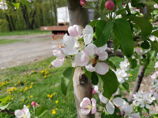And on Our Farm there were some BEEs