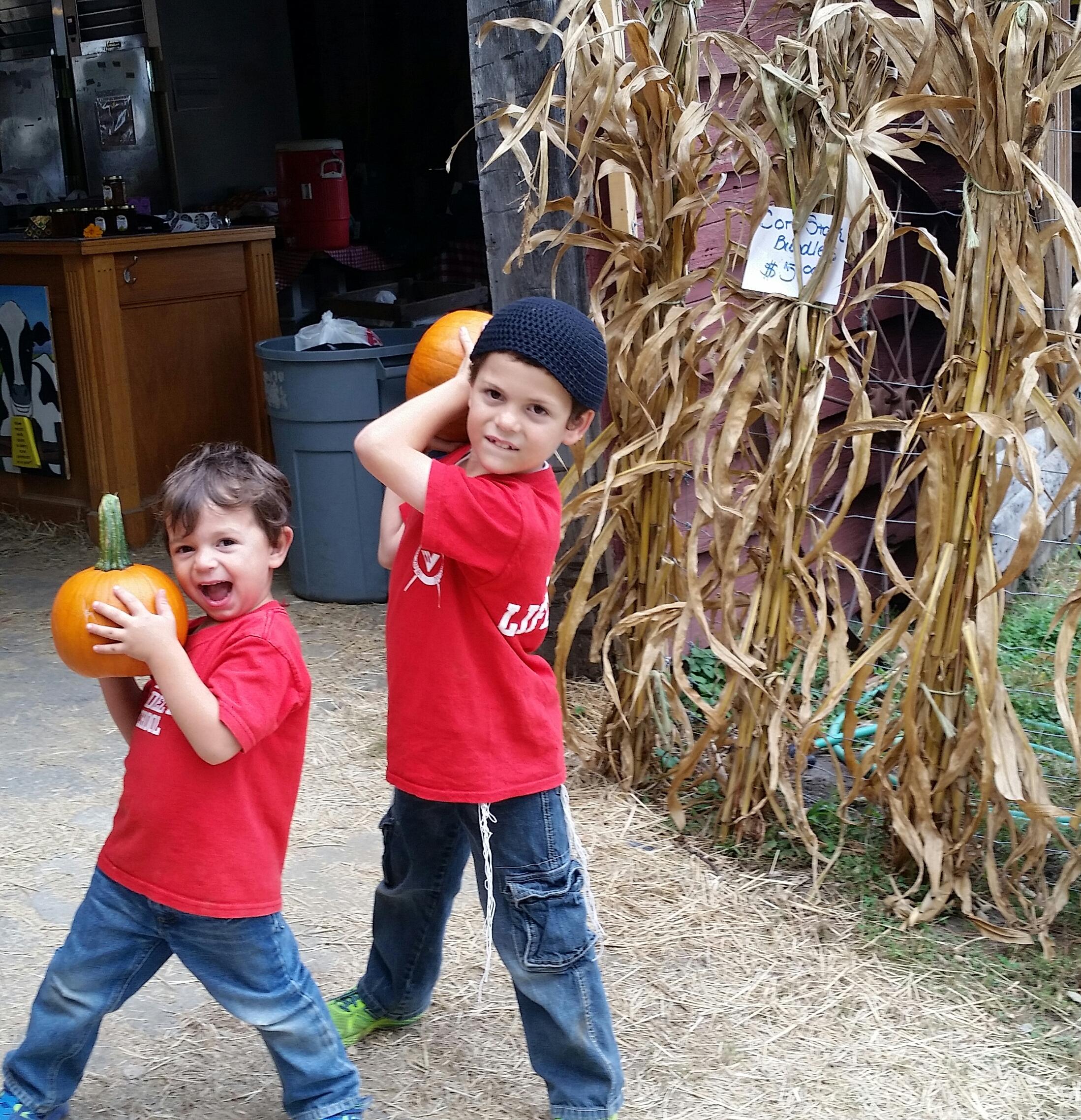 pumpkins kids ny barn