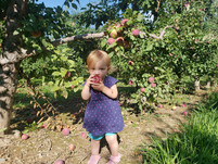 How to Pick an Apple