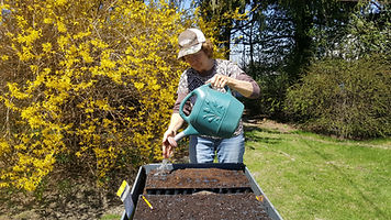 susan hurd wets the soil to prepare for