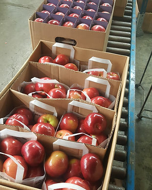 ulster county fresh picked apples ready
