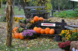 pumpkins outside barn
