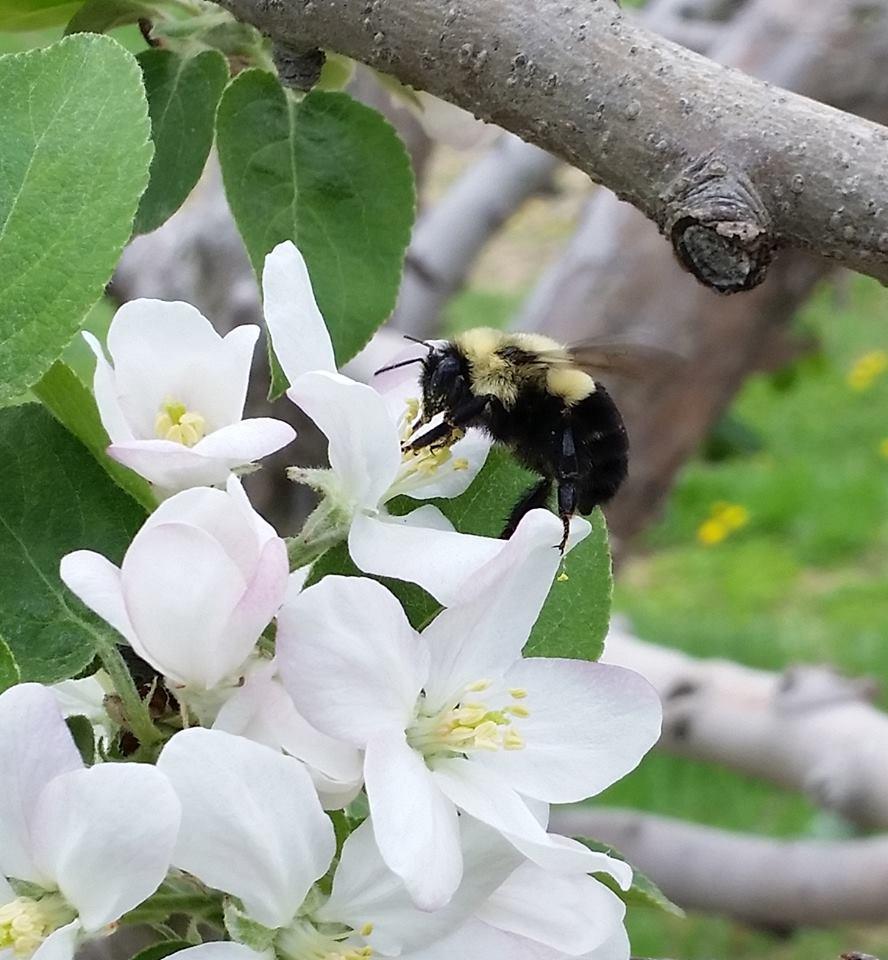scenery bees