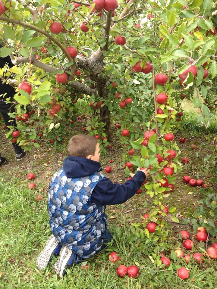 apple picking boy