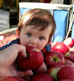 scarlett eats apple right from the bin u