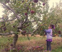 apple picking low girl_edited_edited