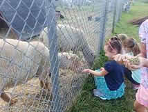 farm fall birthday farm animal feeding petting hudson valley ny.jpg
