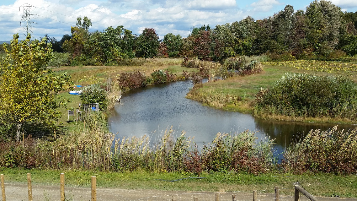 Hudson valley nature fish pond