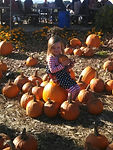 Pick your own pumpkins at Hurds Family Farm