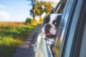 adorable-animal-canine-134392 (1).jpg