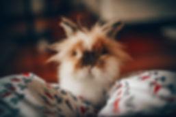 animal-animal-photography-blur-692071.jp